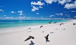 Fåglar som flyger på en kritvit strand på Seychellerna