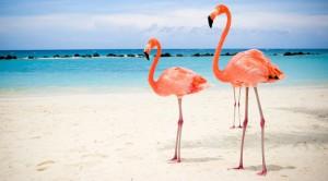 Aruba & Curaçao - 2 öar i Karibien